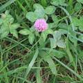Photos: ピンク色の花