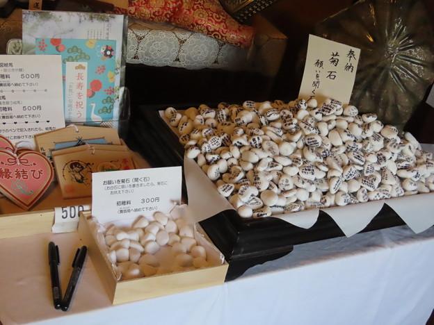 Photos: 菊石