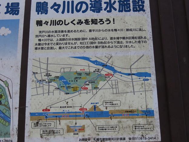 札幌の鴨々川遊水場IMG_0464