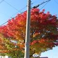 Photos: 聳え立つ電柱IMG_0486