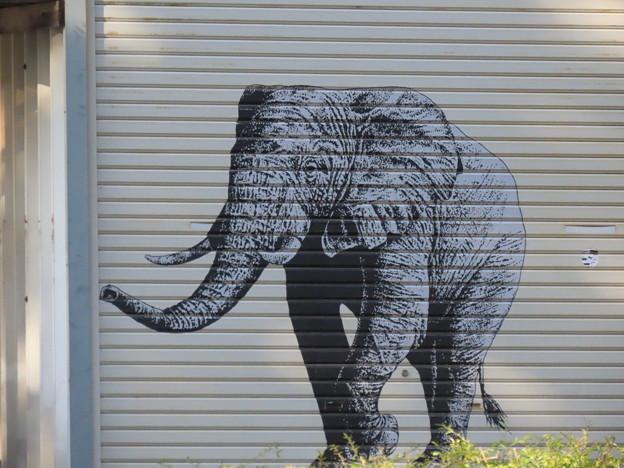 住宅地に象さんIMG_0488