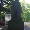 Photos: 狛犬のおしり DSC_0549