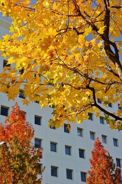 大阪城街路樹