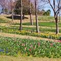 Photos: 広大な花園