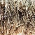 Photos: 小麦乾燥