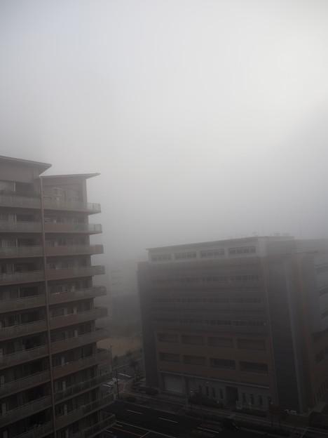 早朝濃霧(10月30日)