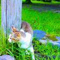 Photos: |д゚)チラッ