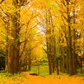 Photos: 秋色の散歩道