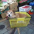 Photos: かご犬