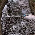 花筏の流れ2