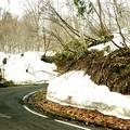 鳩待峠残雪のある坂道
