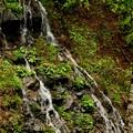 木の実の滝