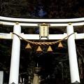 写真: 宝登山(ほどざん)神社の鳥居
