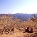 写真: 宝登山の蝋梅風景5