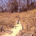 写真: 宝登山の蝋梅風景10