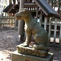 宝登山の奥宮の狛犬(右)