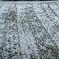 畑への積雪
