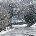 降雪風景3