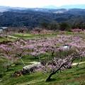 新府の桃源郷風景1