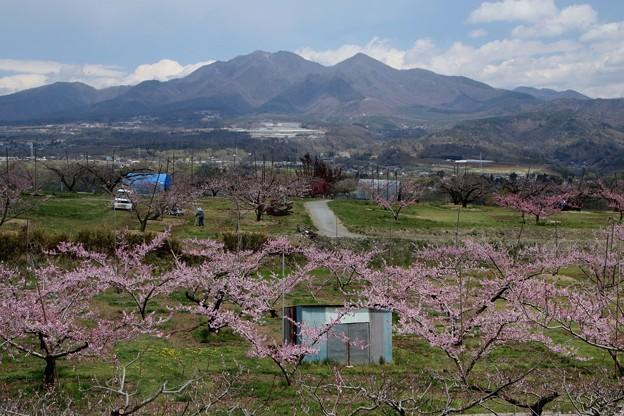 新府の桃源郷風景6
