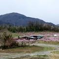 新府の桃源郷風景11