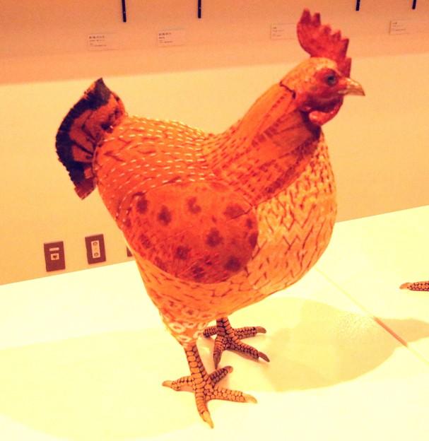 売店動物 鶏