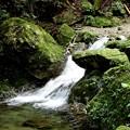 佛沢の滝の渓流