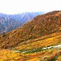 大観峰よりの紅葉9
