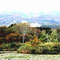 秋のいもり池1