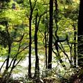 林からの大源太湖