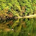 大源太湖への反映