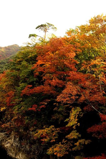 諏訪峡の紅葉3