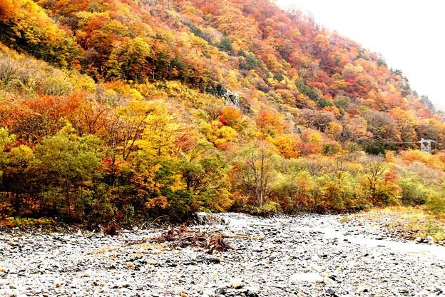 谷川岳への紅葉の川