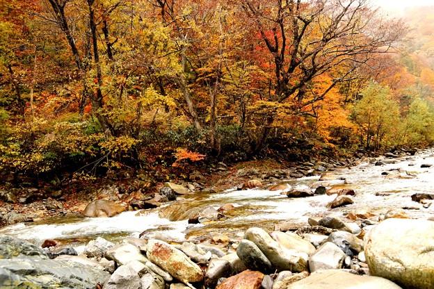 湯檜曽川の紅葉3