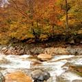 湯檜曽川の紅葉5