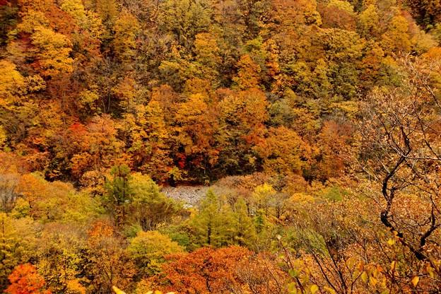 眼下に見える湯桧曽川の紅葉