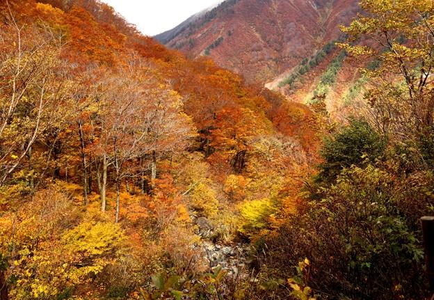 マチガ沢より見える紅葉風景1