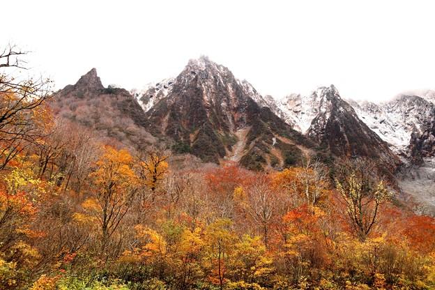 Photos: 紅葉の上に聳える谷川岳