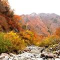 Photos: 一ノ倉沢より見える紅葉風景