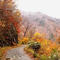 写真: 一ノ倉沢より見える紅葉風景2