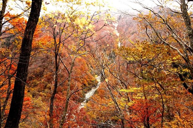 写真: 一ノ倉沢への紅葉15