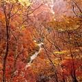 写真: 一ノ倉沢への紅葉17