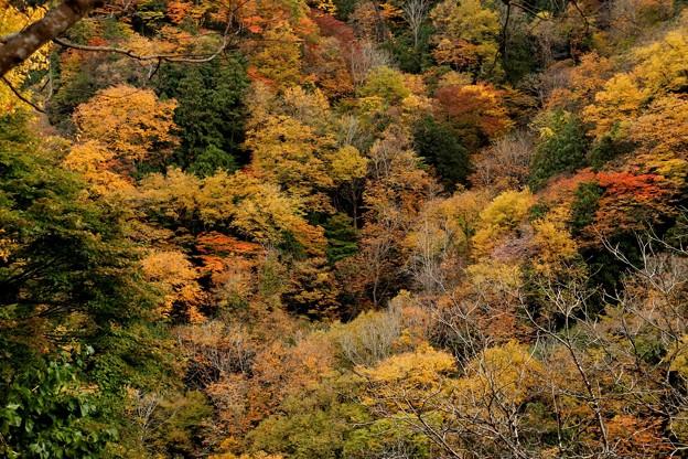 紅葉で染まる山