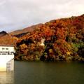 写真: 藤原湖の紅葉