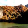 写真: 藤原湖の秋