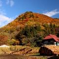 写真: 藤原の紅葉する山