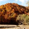 写真: 藤原の紅葉