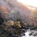 83照葉峡の晩秋風景