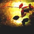 写真: 水と彩光のアート2