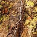 写真: 照葉峡の滝の紅葉